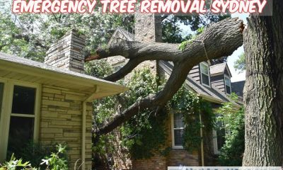 When Do You Need an Emergency Tree Removal Service