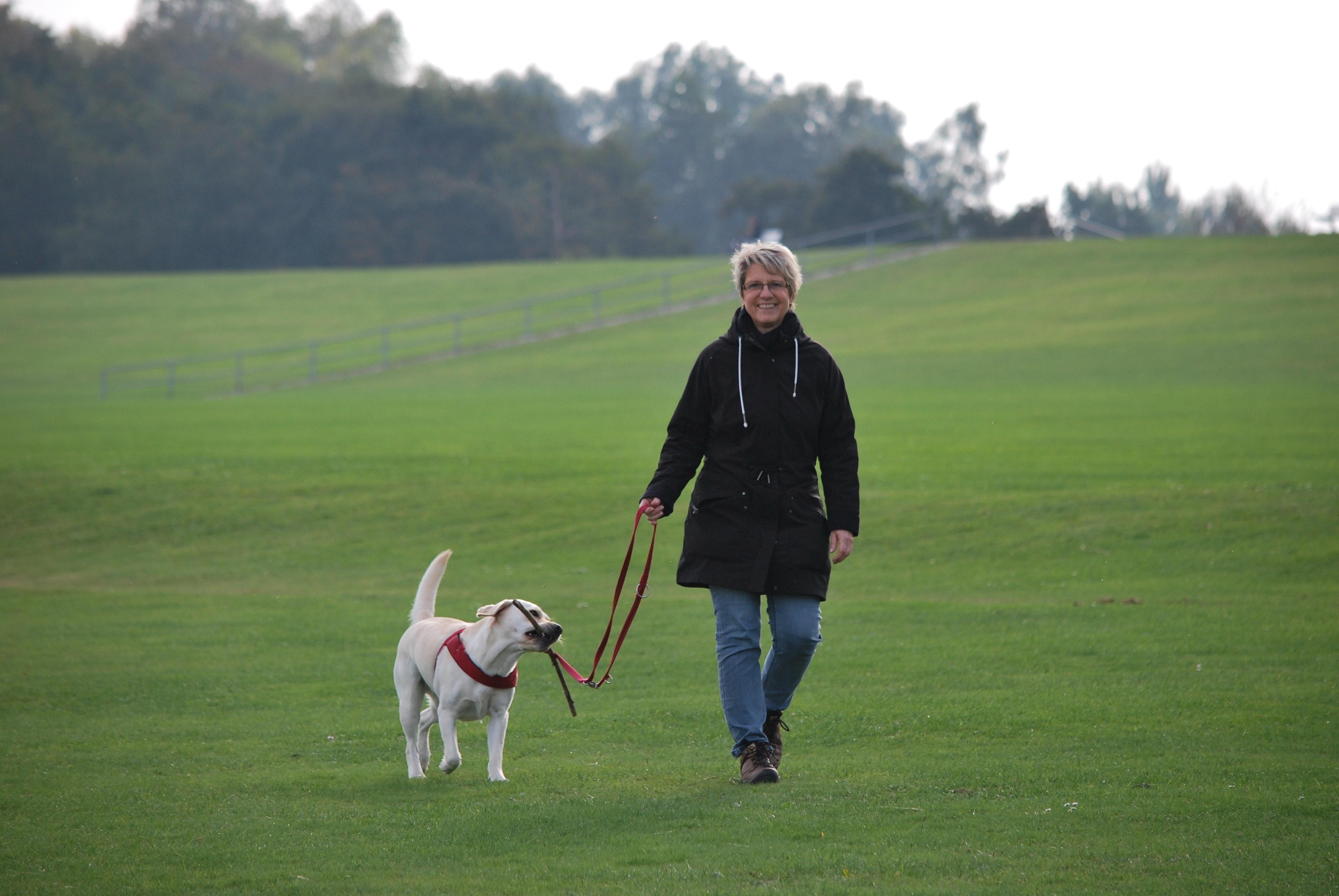 animal-canine-dog-220968